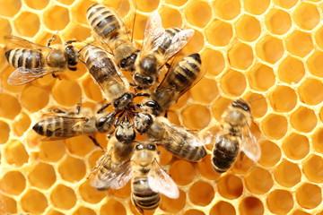 EM nell'apicoltura