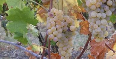 Degustazione vini a Olivone 19 aprile 2019