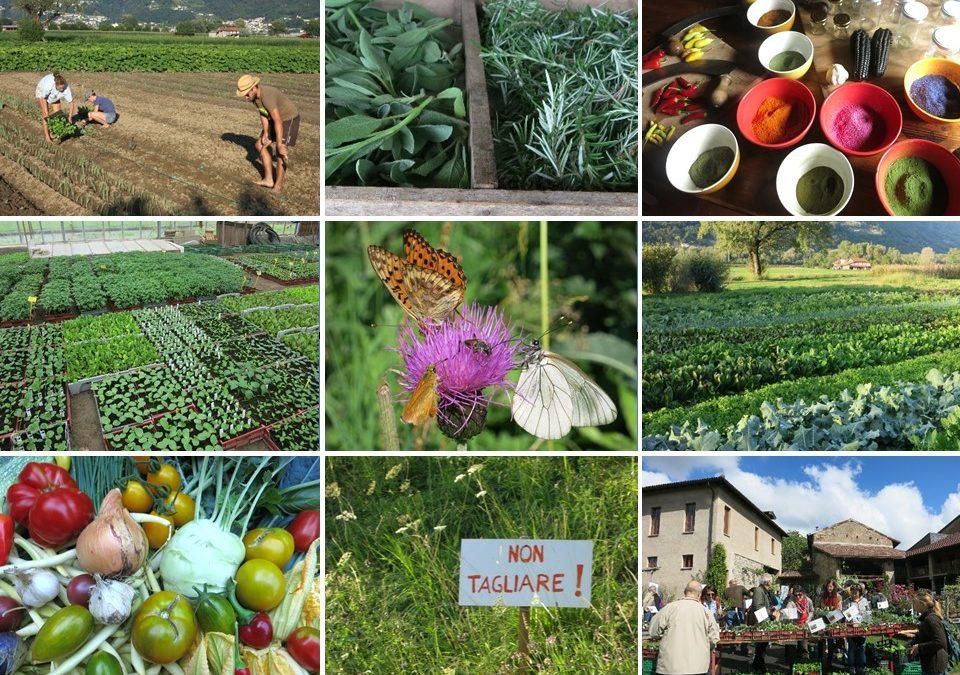 Progetto di agricoltura eco-sociale