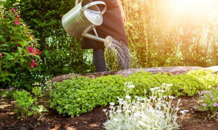 Corso di giardinaggio a Ponto Valentino