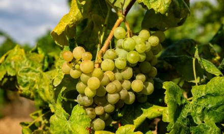 Pomeriggio informativo per viticoltura e alberi da frutta con EMa e altro